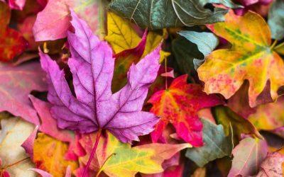 Leaves, leaves everywhere